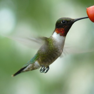 Secrets of a Hummingbird Whisperer