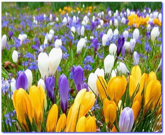 Spring Garden Show Brings Blooms
