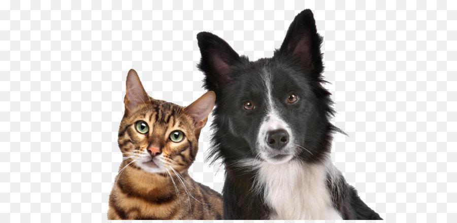 MIAMI HERALD – HI-Tech Pet Gear Keeps Dogs Cats Safe, Comfortable