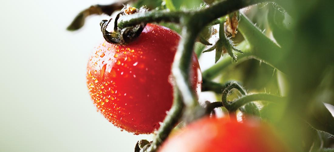 SOUTHPARK MAGAZINE – Crimson Crop
